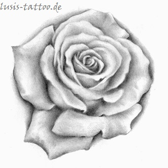 Tattoomotiv Rose
